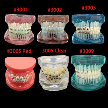 Dental Orthodontic Treatment Demonstration Practice Teeth Model