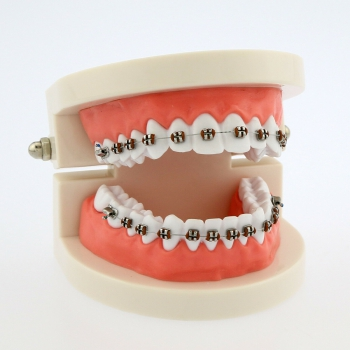 Dental Teach Typodont Demonstration Teeth Model with Braces For Patient Study 50...